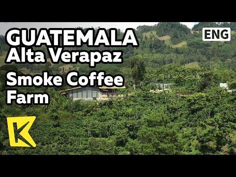 【K】Guatemala Travel-Alta Verapaz[과테말라 여행-알타베라파스]스모키 커피 재배 농장/Smoke Coffee Farm/Guatemala Coffee