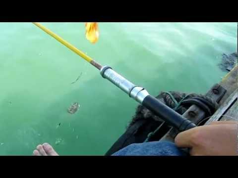 Câu cá nâu, cá tho, cá rìa trên sông Nhật Lệ - fishing