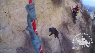 Animal Rescuers Save Black Cat Stuck 100 Feet Up Cliff