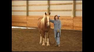 Three Foundations & Wholistic Joining with Gentle Horse Trainer Missy Wryn thumbnail