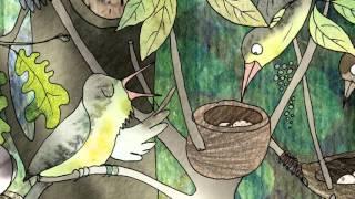 Sekretne życie Ptaków - Część 4