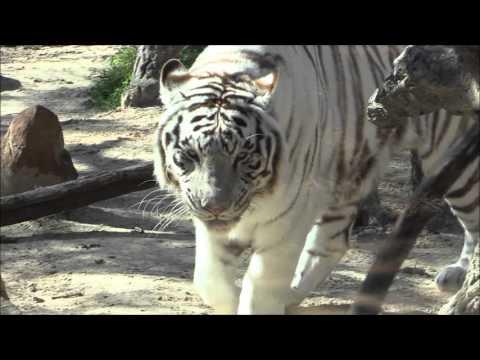 Caldwell Zoo in Tyler Texas (Walk through)