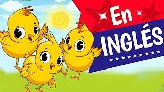 LOS POLLITOS DICEN, En Ingles, Canciones infantiles, Little chicks are squeaking,