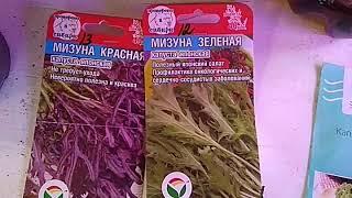 Осторожно! Пересорт! Разоблачение листовой капусты Мизуна красная.