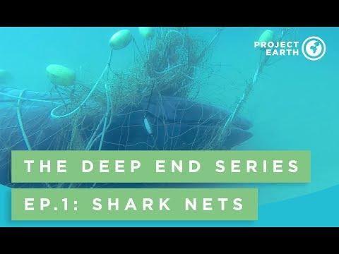 The Deep End Series Episode 1: Shark Nets
