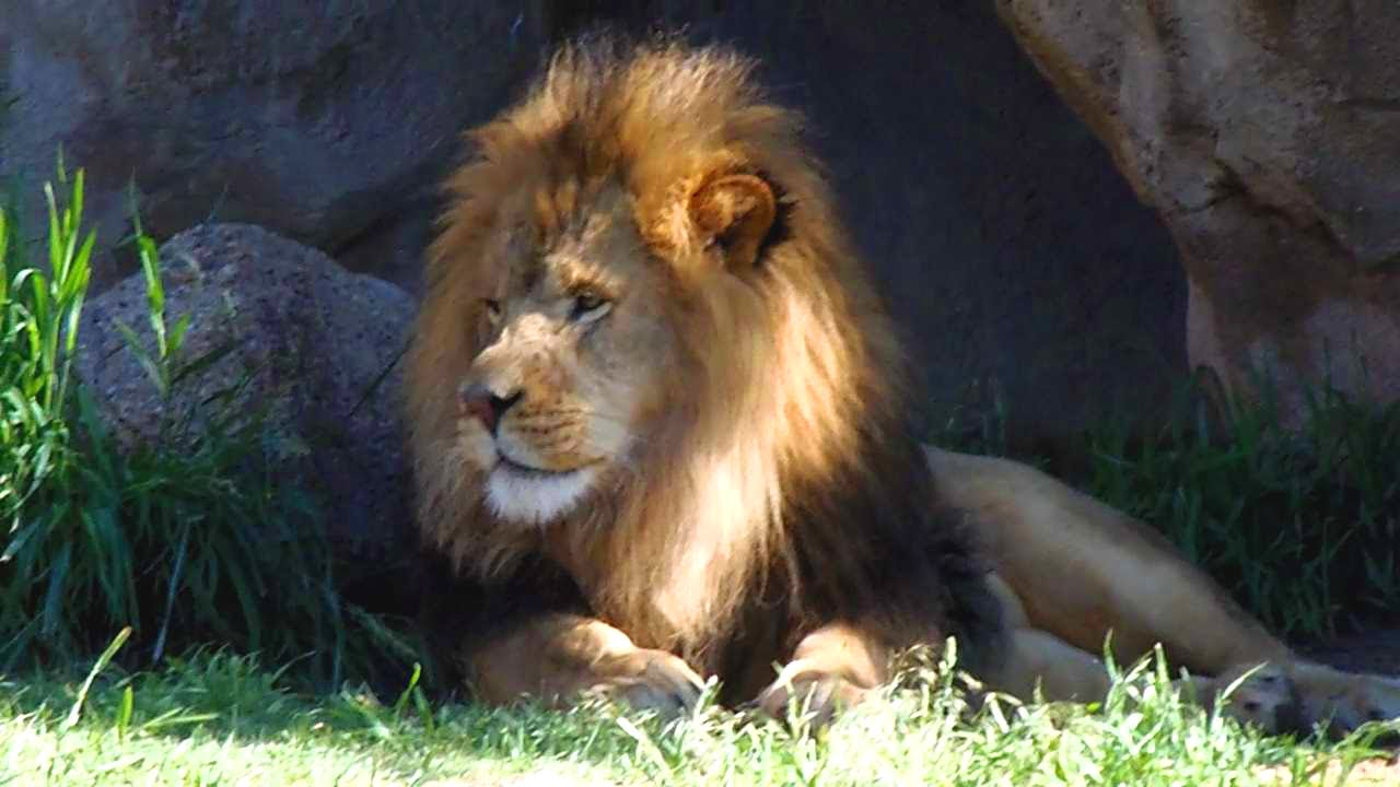 animal adventure at the denver zoo colorado usa youtube. Black Bedroom Furniture Sets. Home Design Ideas