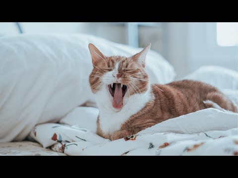 😹 Funniest Scared Cats 🙀 Compilation #2