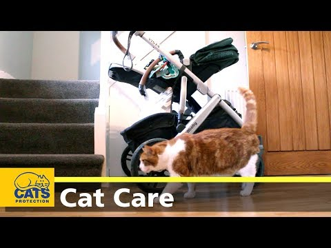 Preparing your cat for your baby's arrival - Cats Protection's Kids and Kitties