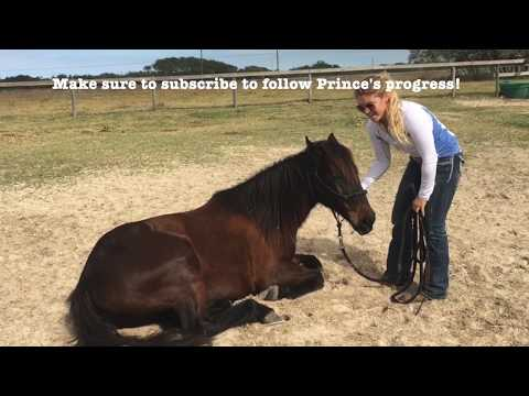 Teaching the Lay Down with Prince the Mustang - Day One thumbnail