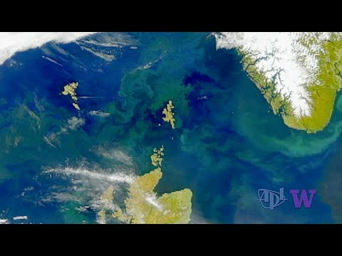 Eddies Drive Particulate Carbon Deep in the Ocean During the Spring Phytoplankton Bloom