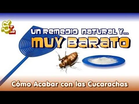 Remedios caseros contra moscas y mosquitos foro de - Remedio contra las moscas ...