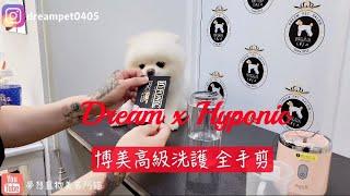 大家期待的博美犬 全手剪不藏私大公開 /Pet grooming 夢想寵物美容 130  寵物美容師阿貓 HYPONIC