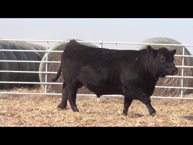 Express Ranches Lot 323