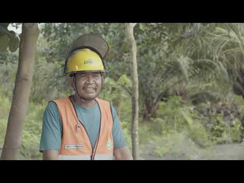 A Day In An Oil Palm Harvester's Life