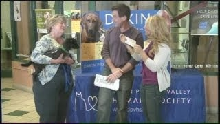 Mass Appeal Pet Of The Week Toto