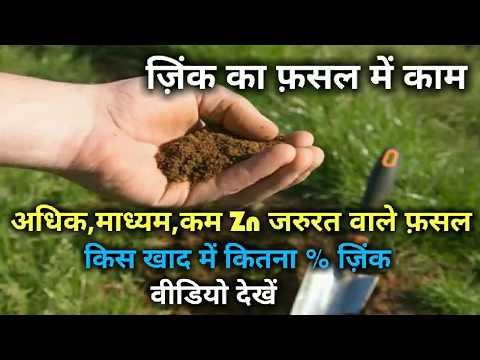 ज़िंक(Zn) का फसल में महत्व। Zink important role in crop.