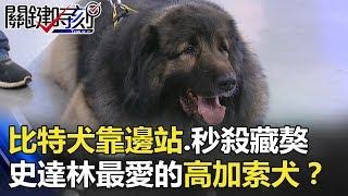 比特犬都要靠邊站… 秒殺藏獒!史達林最愛的巨獸「高加索犬」!? 關鍵時刻 20180404-2 馬西屏 陳建宏