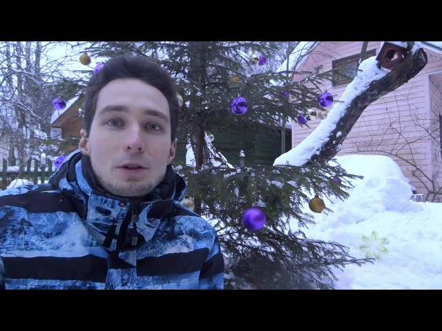 Д.О. Науменко | Новогоднее поздравление (2016-2017)