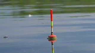 Караси и щуки топят поплавки Рыбалка на поплавочные удочки My fishing