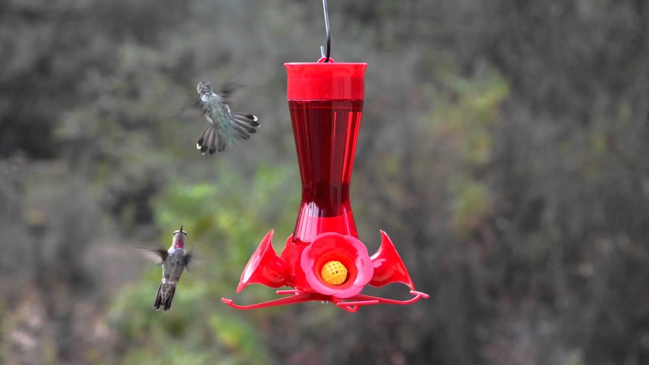 garden outdoor humingbird feeders perky bird amazon com pet feeder looking wild hummingbird glass dp