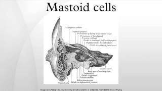 Mastoid cells