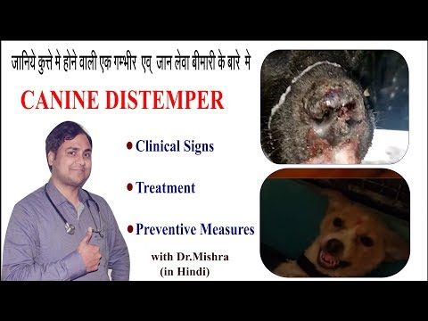 CANINE DISTEMPER: Signs,Treatment & Preventive Measures