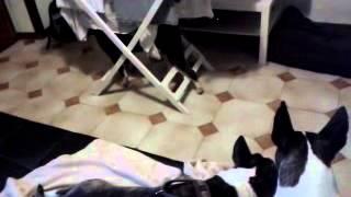 Snoopy Bull Terrier Va In Trance