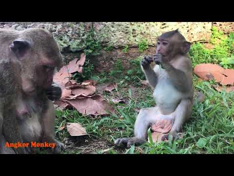 Funny babies monkeys want to go inside Asian cute girl's skirt - Sweatpea is hit until crying loudly