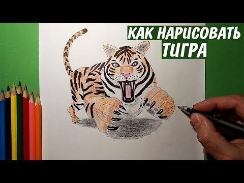 Как нарисовать тигра карандашом легко