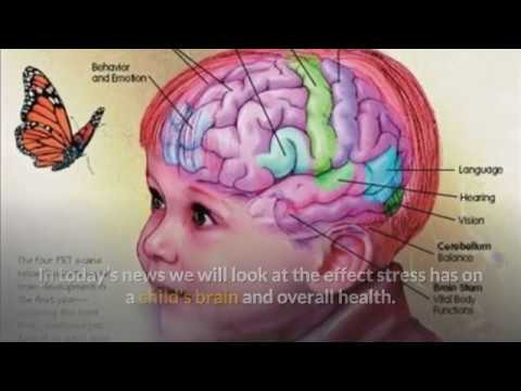 Stress And Your Childs Brain >> A Stressed Out Childhood Could Hurt Your Child S Brain And Overall
