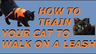 How to Walk a Cat on a LEASH