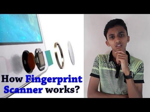 How does Fingerprint Scanner works | Types of Fingerprint Scanners | Tech MS