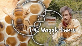 Why do honey bees dance? | We The Curious