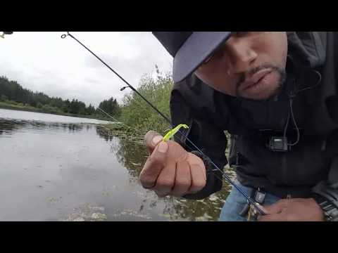 Crappie Fishing In Washington State Using 1 In. Gulp Chartreuse Shad