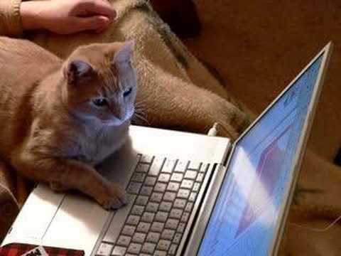 Image result for cat at computer