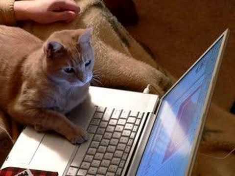 Bildergebnis für computer cat