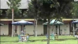 Wonosari Tea Plantation 2  - Malang - East Java