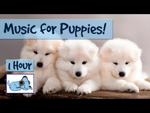 Music for New Puppies! Help to Housetrain Puppies, Soothing Music for Puppies, Looking After Puppies