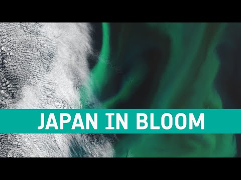 Earth from Space: Japan in bloom
