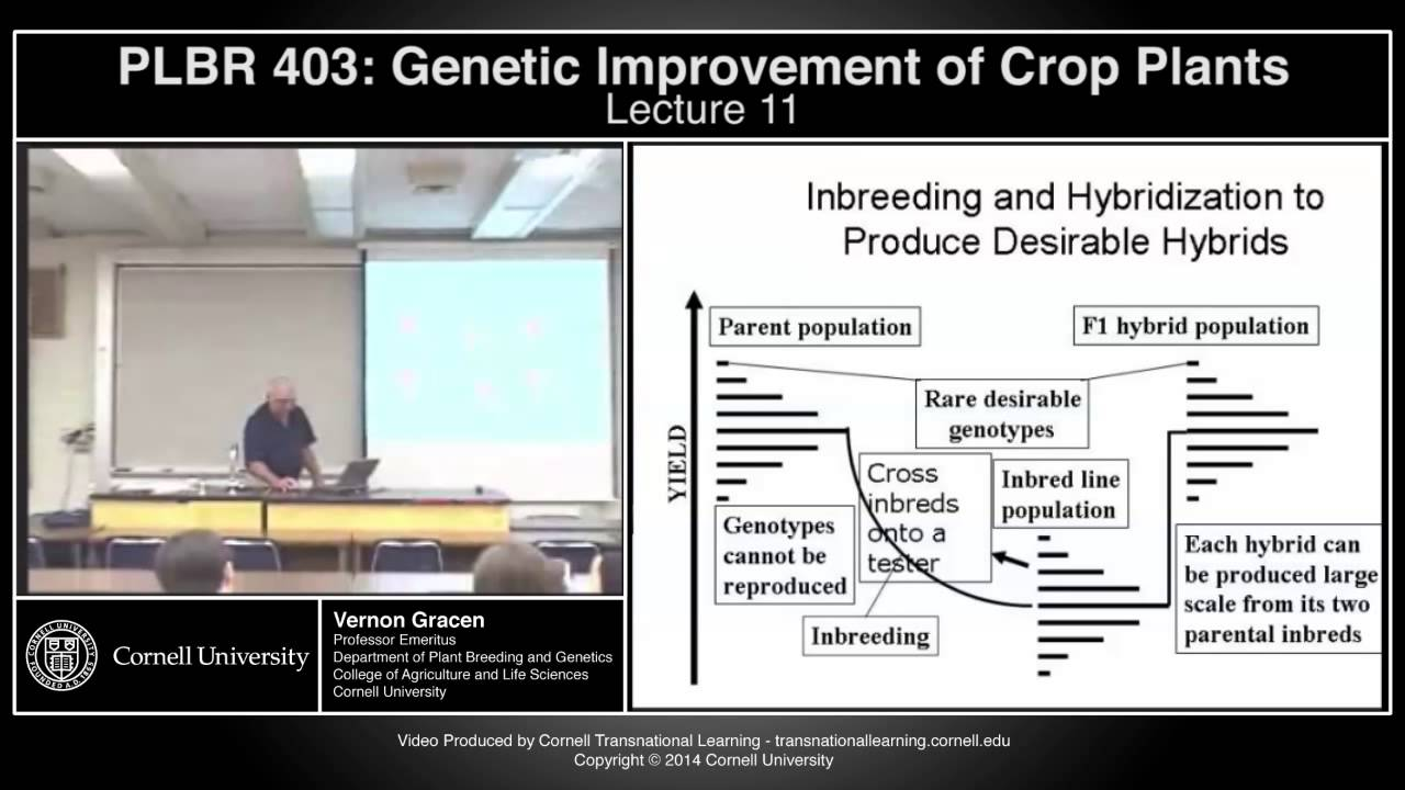 the improvement of plants through genetics Thus, a major goal of plant scientists is to find ways to maintain high productivity under stress as well as developing crops with enhanced nutritional value genetically-modified (gm) crops can prove to be powerful complements to those produced by conventional methods for meeting the worldwide demand for quality foods.