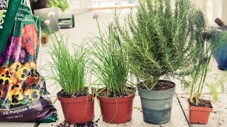 Lily Kwong's Gardening Tips