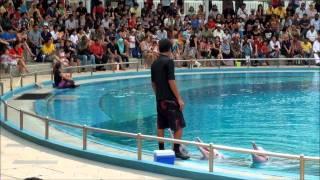 Dolphin Show Sentosa Singapore 5