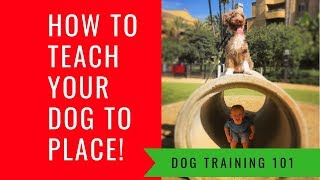 Dogs 101 Step by Step Basic Obedience How To Get Any Dog To Sit, Down, Come, Place & Heel
