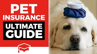 The Ultimate Pet Insurance Guide: Is Pet Insurance Worth It?
