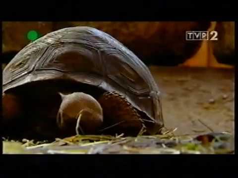 ZOO STORY TVP 2 odcinek 3