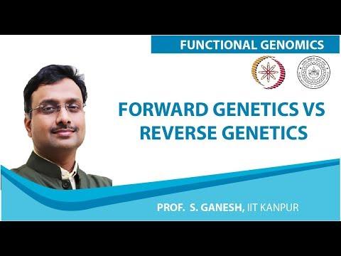 Forward Genetics vs Reverse Genetics