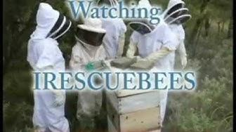 Bee Removal Ann Arbor / Ann Arbor MI Bee Removal