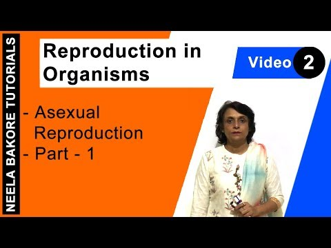 Asexual reproduction in plants regeneration station