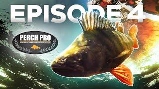 PERCH PRO 7 Episode 4