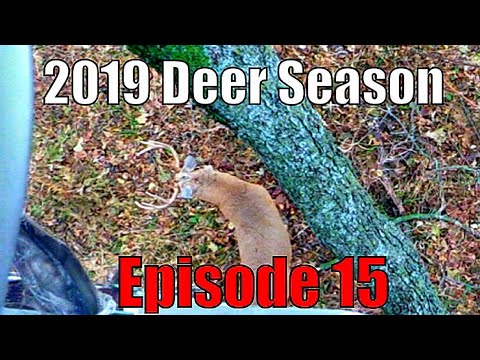 Hunting A HUGE Buck's Bed! Aggressive Self-Filmed Bowhunting! 2019 Deer Season- Episode 15